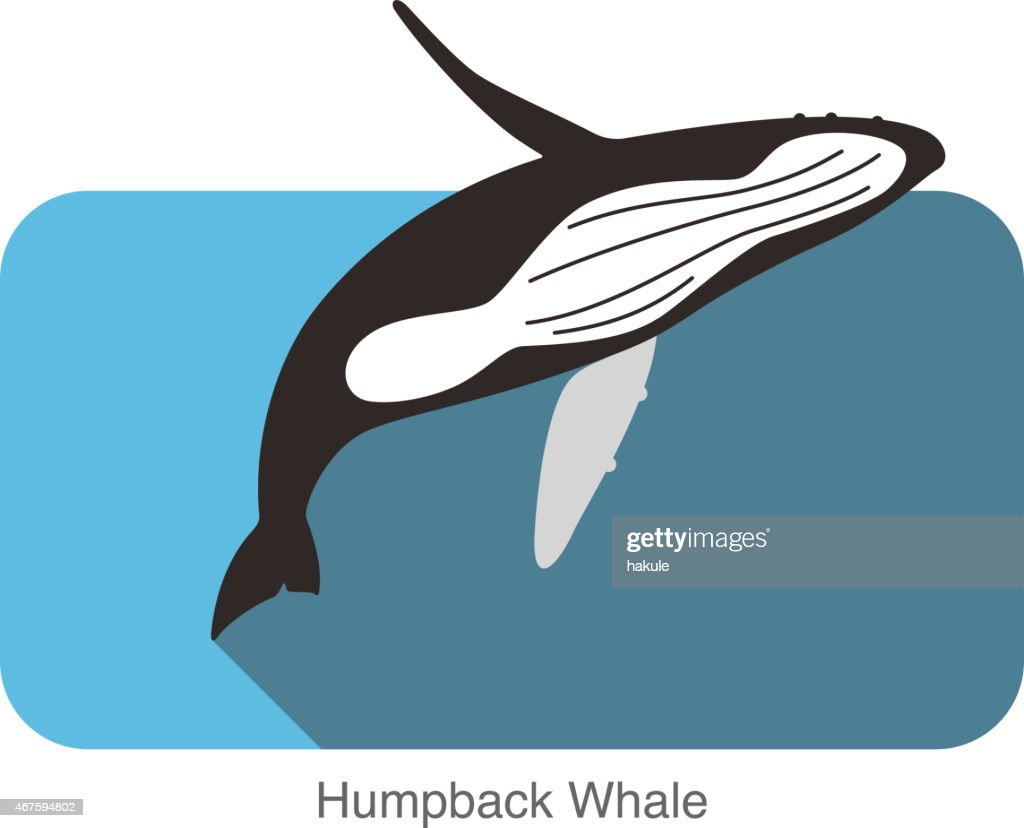 Humpback Whales jumping in the sea, animal flat icon : stock illustration