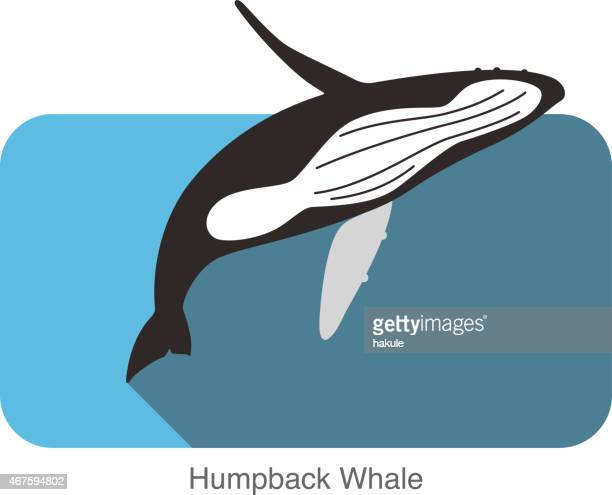 an introduction to the humpback whale sea mammal Marine mammals jan roletto summary the humpback whale and blue whale are federally listed as endangered species and the steller sea lion is listed as a threatened.