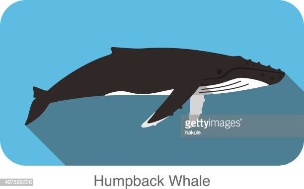 Humpback Whale Stock Illustrations And Cartoons   Getty Images
