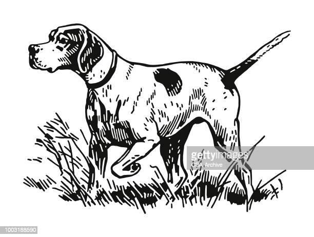 illustrations, cliparts, dessins animés et icônes de chien de chasse - chasseur