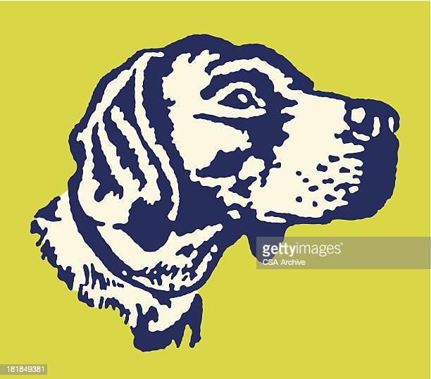 hunting dog - pointer dog stock illustrations