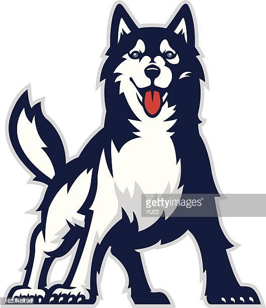 huskie mascot - sled dog stock illustrations
