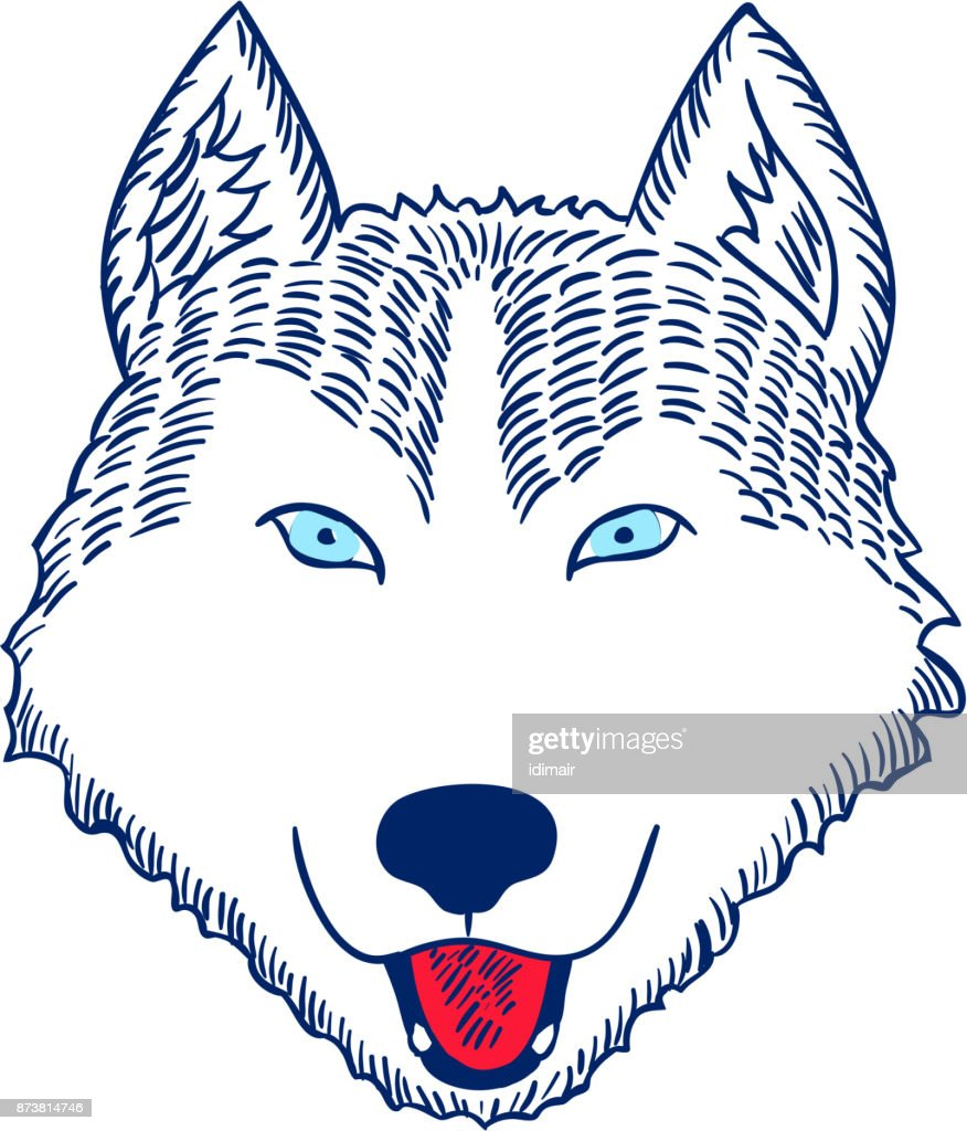 Husky Head Hand Drawn Dog Head. Vector