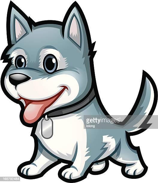 Husky Hund