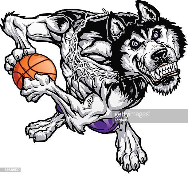 Husky Rebound