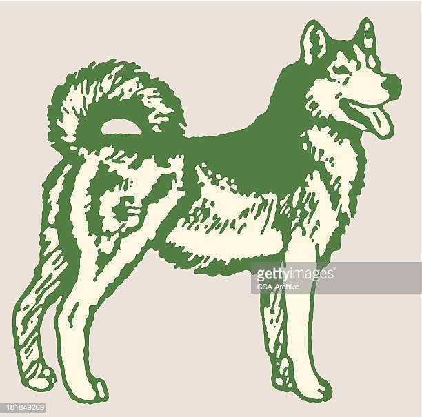 husky - sled dog stock illustrations