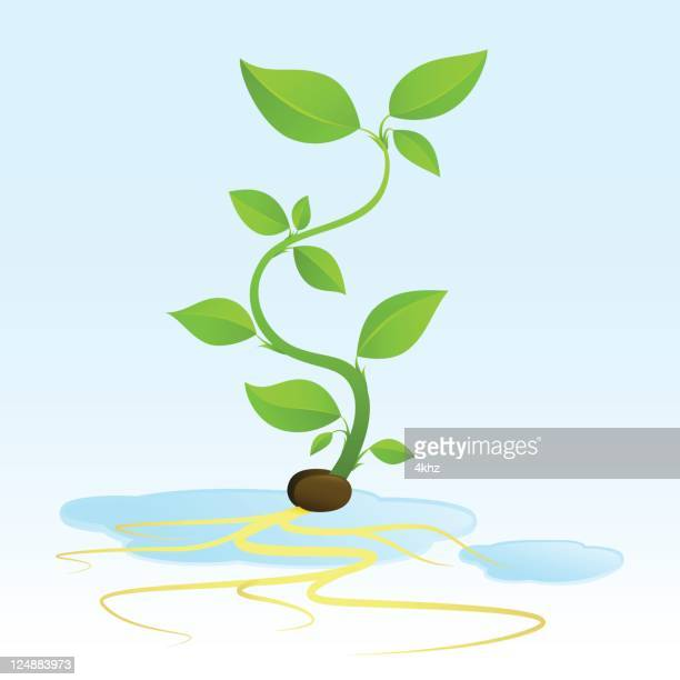 hydroponic sprout growing from seed with roots - puddle stock illustrations, clip art, cartoons, & icons