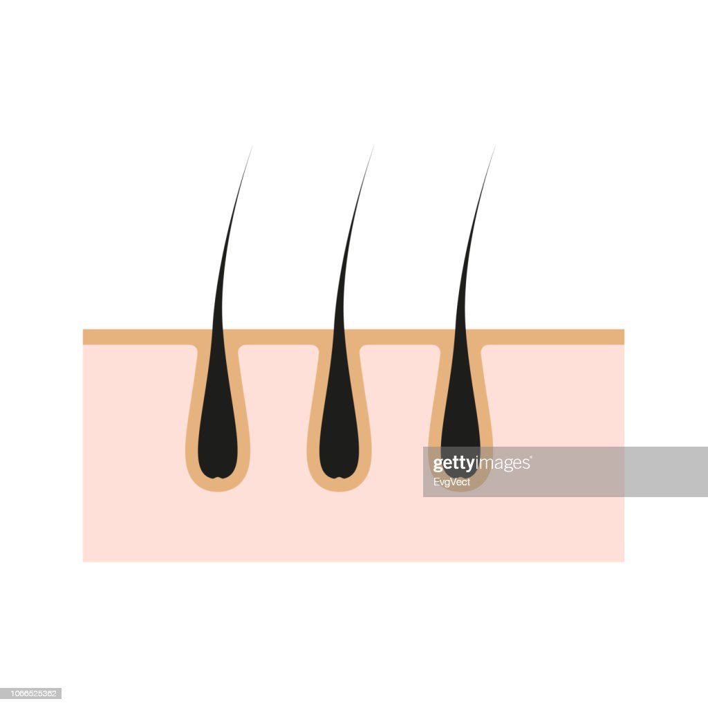 Icon illustration of skin hair. Vector element on isolated background for cosmetic depilation, medicine projects.