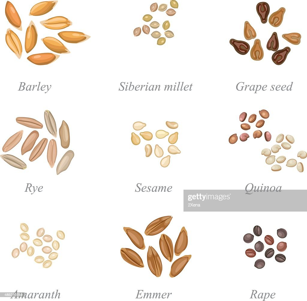 Icon set of cereal grains part 2