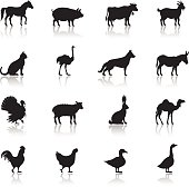 Icon set of farm animals on white background