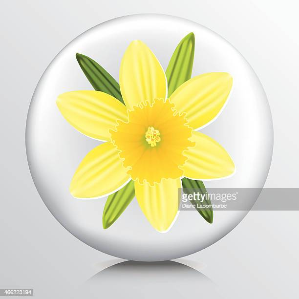 icon with yellow daffodil - daffodil stock illustrations, clip art, cartoons, & icons