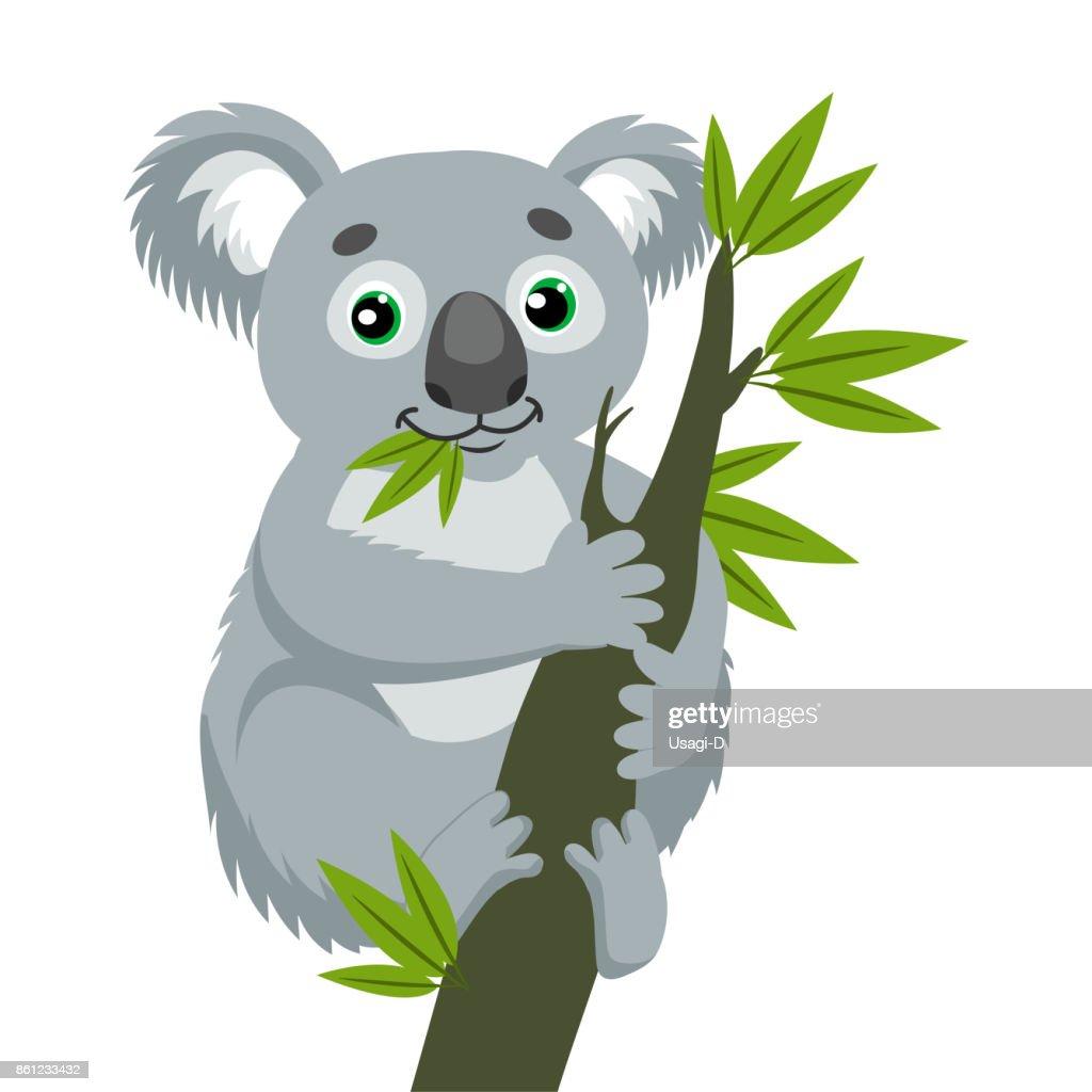 Iconic Marsupials. Koala Bear On Wood Branch With Green Leaves. Australian Animal Funniest Koala.