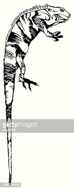 ilustraciones, imágenes clip art, dibujos animados e iconos de stock de iguana de bw - iguana