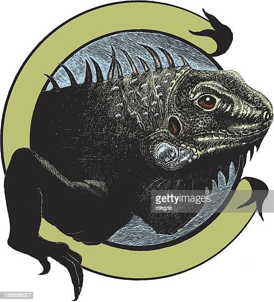 ilustraciones, imágenes clip art, dibujos animados e iconos de stock de iguana medio - iguana