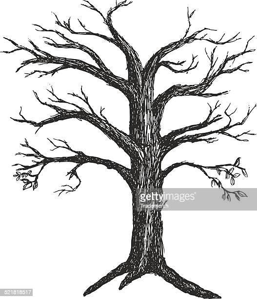 Illustrato autunno albero senza foglie