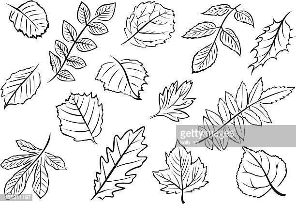 illustrated leaves - aspen tree stock illustrations, clip art, cartoons, & icons