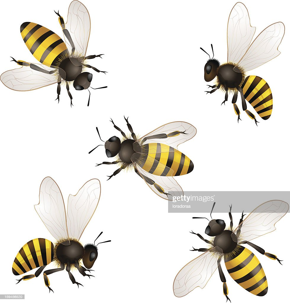 Illustrated set of honey bees on white background