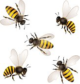 Illustrated set of honey bees on white background