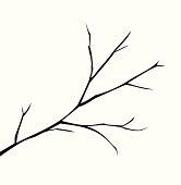 Illustration of a branch vector