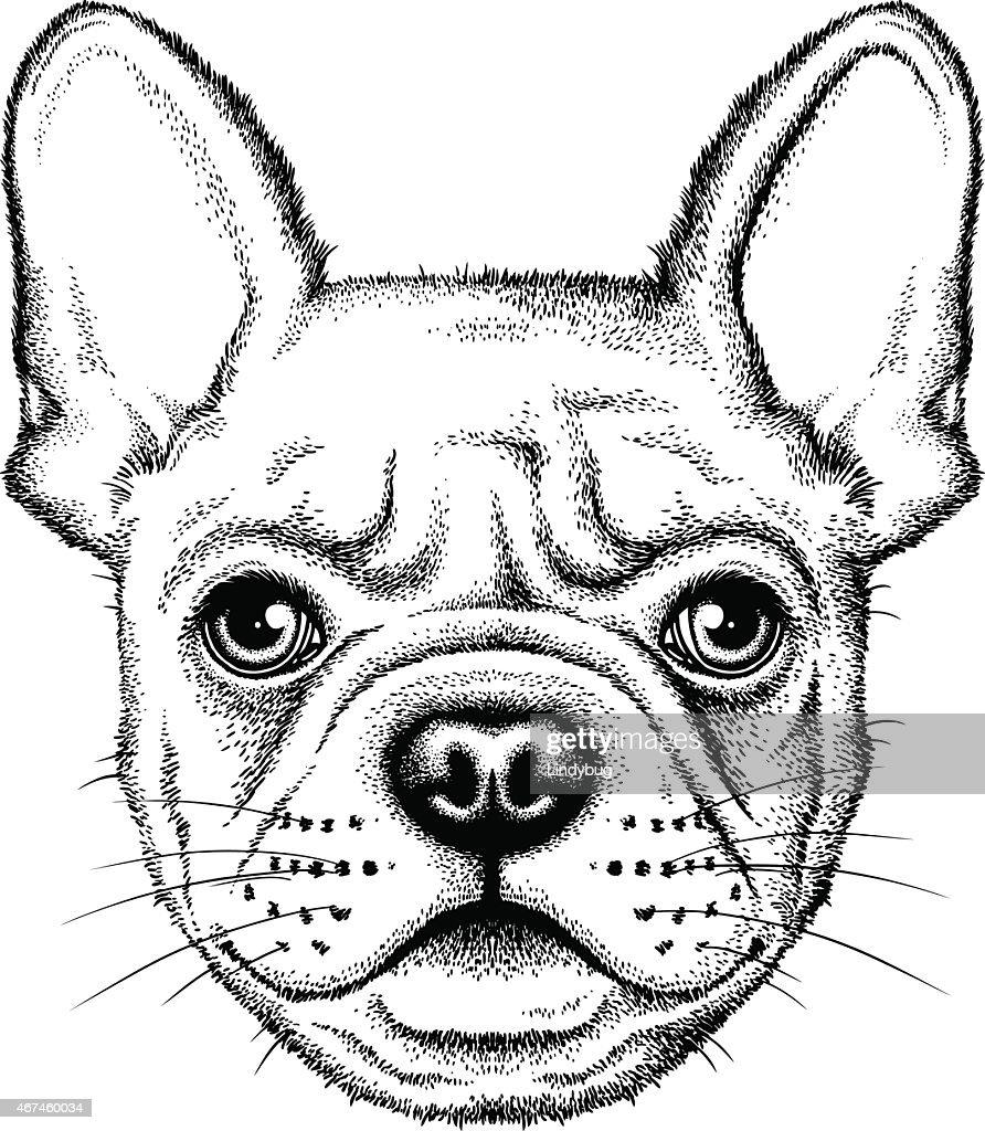 Illustration of a cute French bulldog