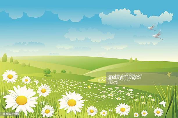 illustration of a daisy flower field - gras stock illustrations