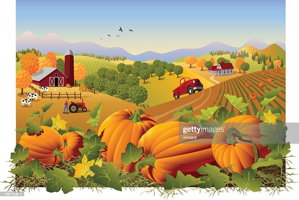 Illustration of a farm and field in autumn with pumpkins