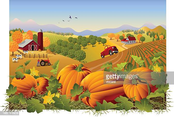 illustration of a farm and field in autumn with pumpkins - harvesting stock illustrations
