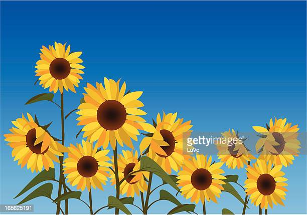 illustration of a field of sunflowers against a blue sky - sunflower stock illustrations, clip art, cartoons, & icons