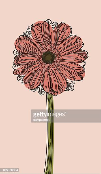 illustration of a gerbera daisy on a light pink background  - gerbera daisy stock illustrations, clip art, cartoons, & icons