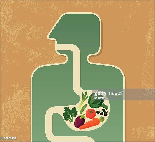 illustration of a human digesting fruits and vegetables - human digestive system stock illustrations