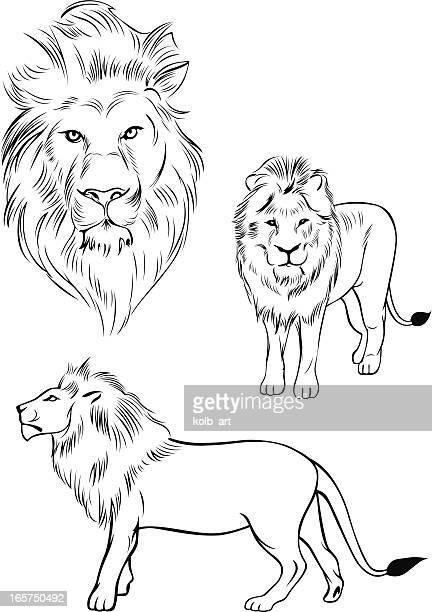 illustration of a lion - animal mane stock illustrations, clip art, cartoons, & icons