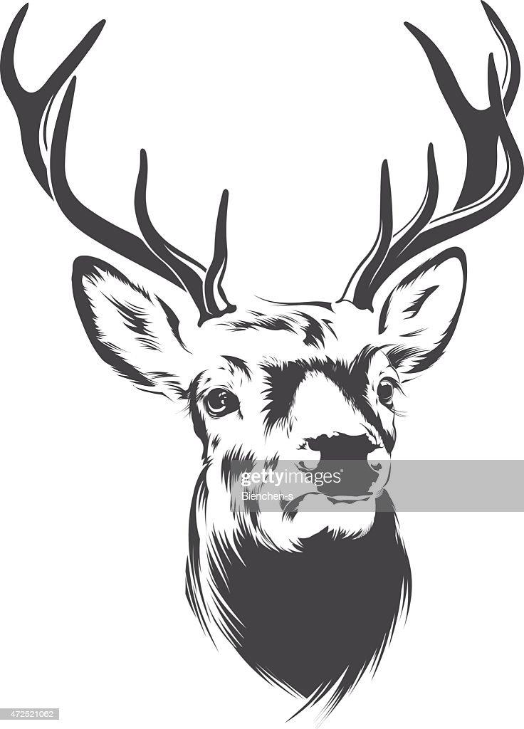 Illustration of a male deer head