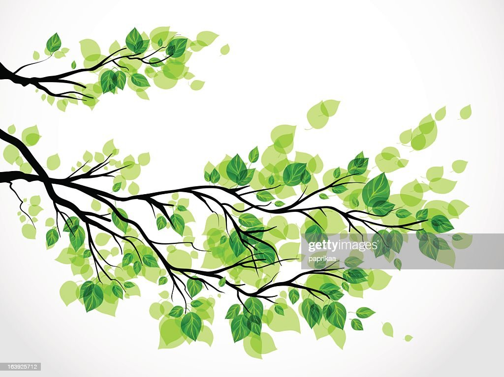 Illustration of a tree branch with green leaves