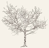 Illustration of a tree with buds during spring