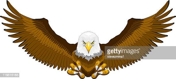 illustration of an incoming bald eagle with talons ready - spread wings stock illustrations