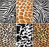 Illustration of Animal Skin Textures
