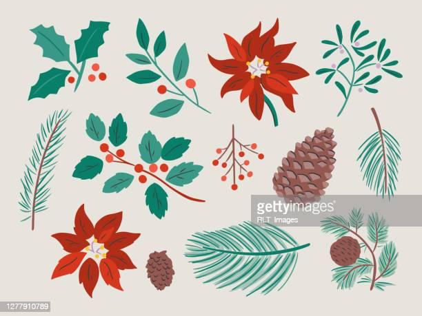 illustration of assorted winter botanicals — hand-drawn vector elements - mistletoe stock illustrations