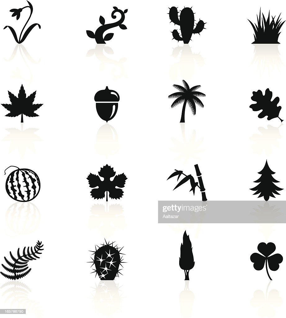 Illustration of black botanic symbols
