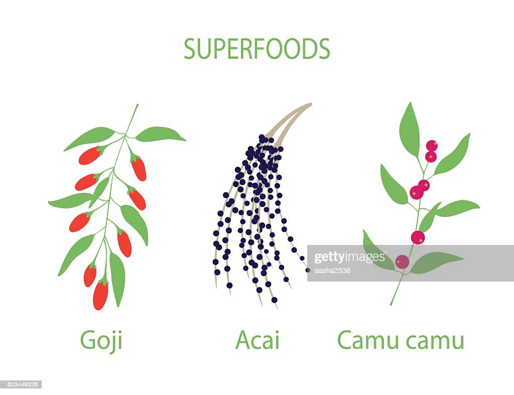 Illustration of camu, goji and acai
