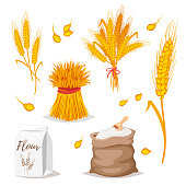 illustration of cereals - wheat.