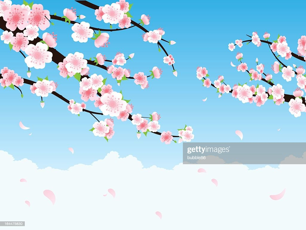 Illustration of cherry blossom branches