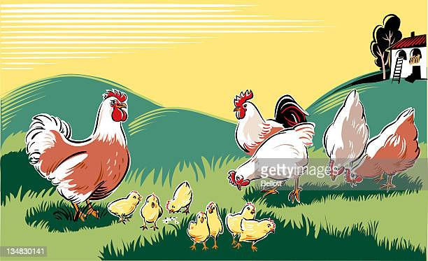 Illustration of chickens and chicks on farm