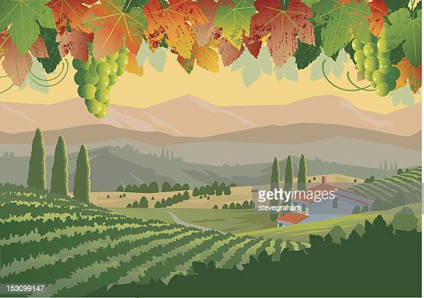 illustration of colorful tuscan vineyard landscape - italy stock illustrations