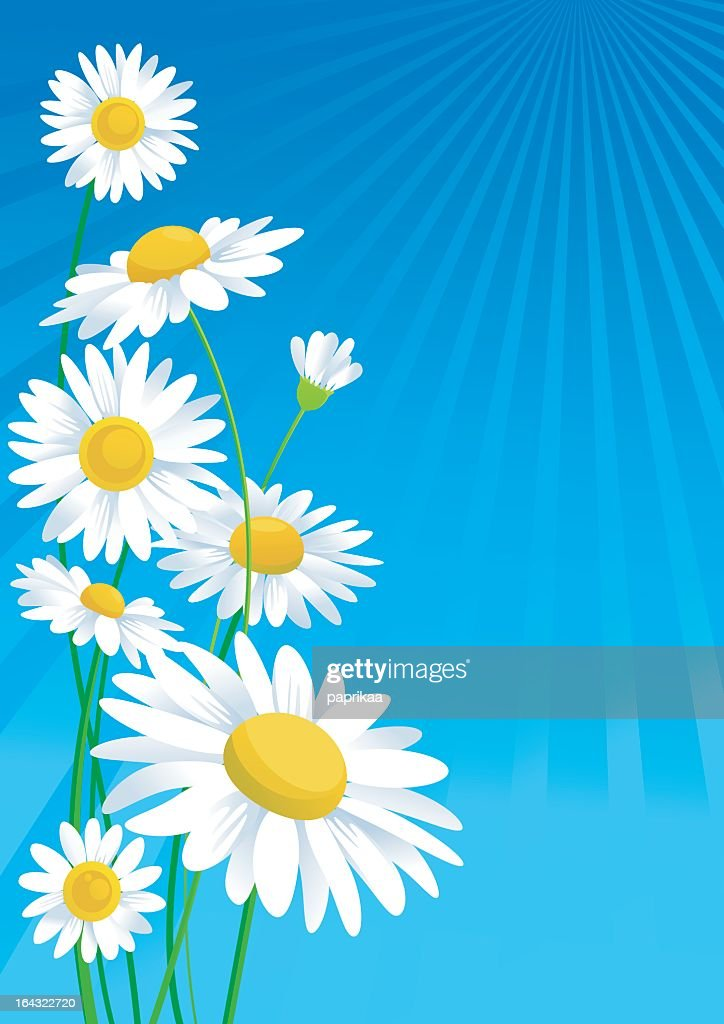 Illustration of daisies on a blue background