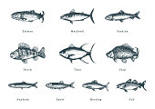 Illustration of fishes on white background. Drawn seafood set in engraving style. Sketches collection in vector.
