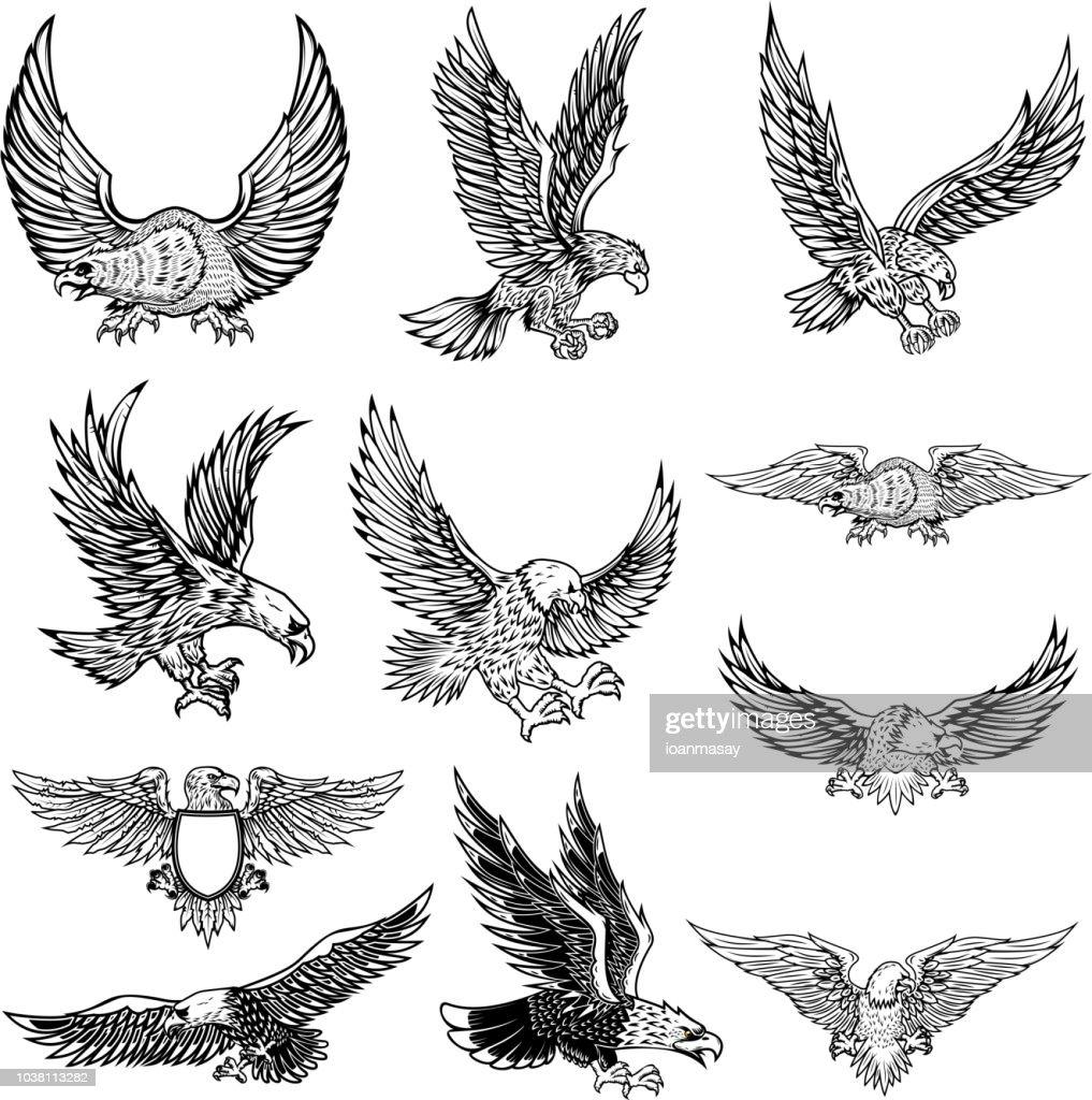 Illustration of flying eagle isolated on white background.