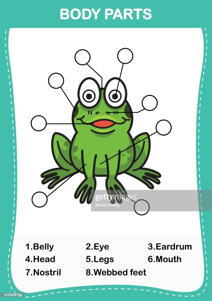 Illustration Of Frog Vocabulary Part Of Bodywrite The Correct