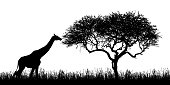 Illustration of giraffe silhouettes and acacia tree with grass in african safari in kenya - isolated on white background - vector