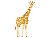Illustration of giraffe.