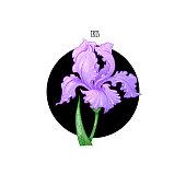 Illustration of iris flower, vector